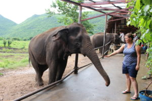 Elephants's World_Kanchanaburi