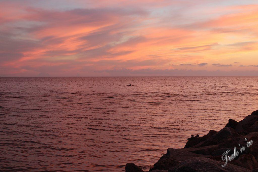 Dauphins en Floride