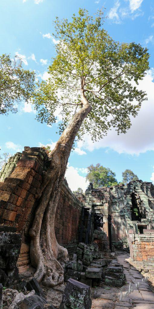 Preak Khan tree