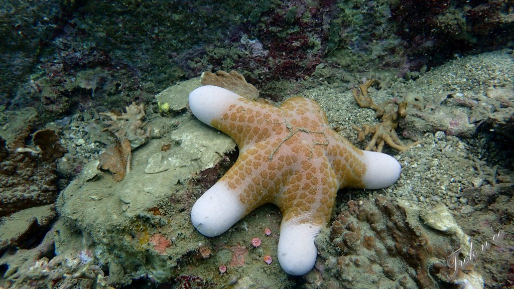 étoile de mer_nhatrang