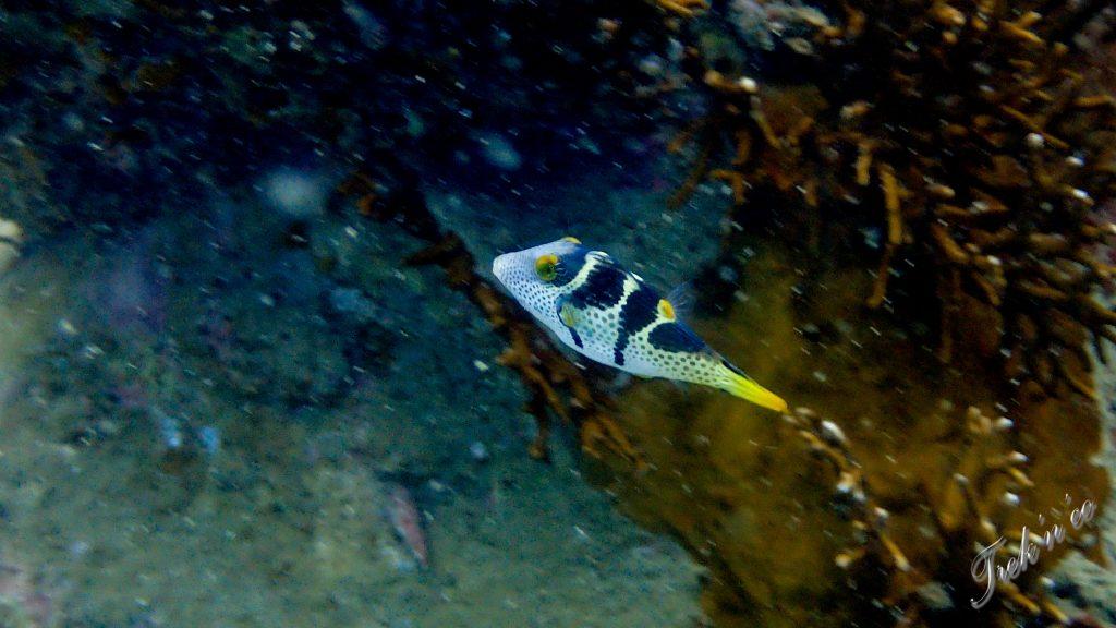 poisson_diving