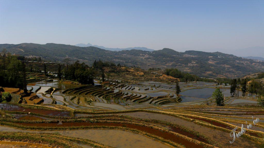 Rizières en Chine