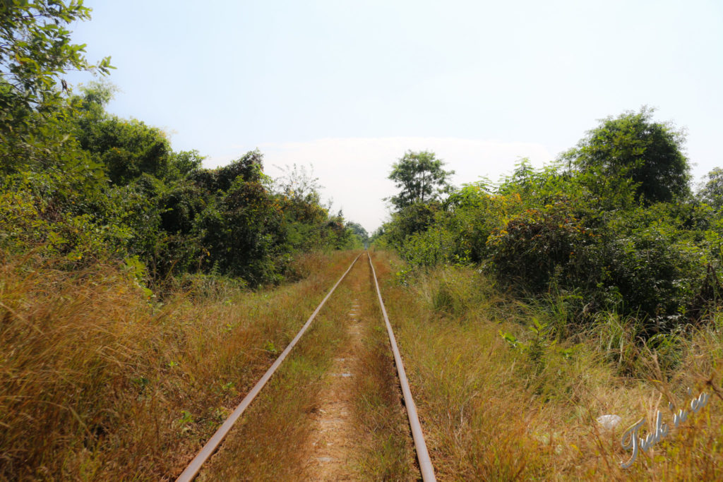 Bamboo train rails