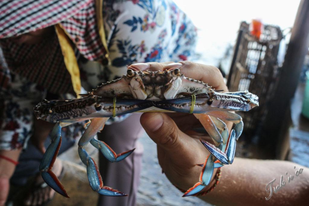 Crabe bleu du Cambodge