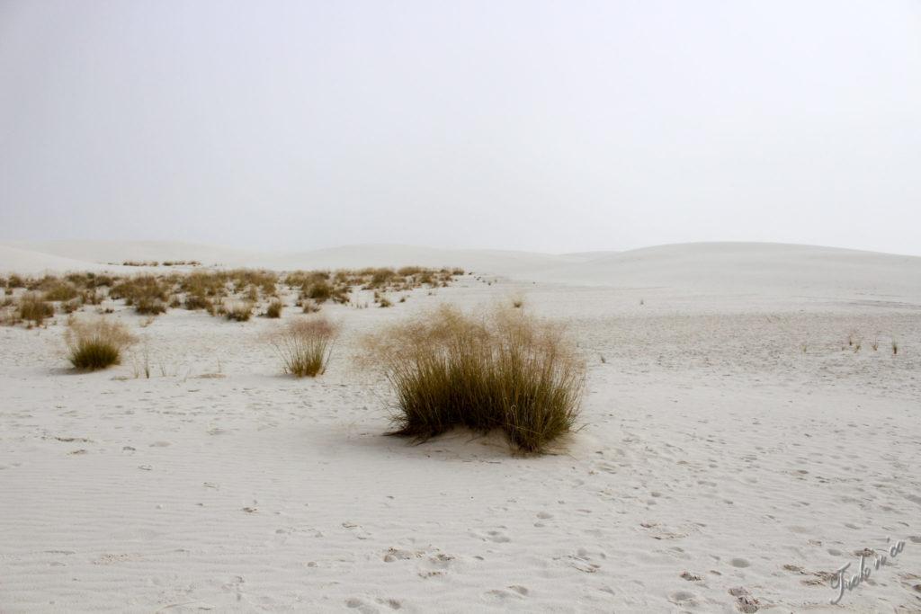 White sands désert