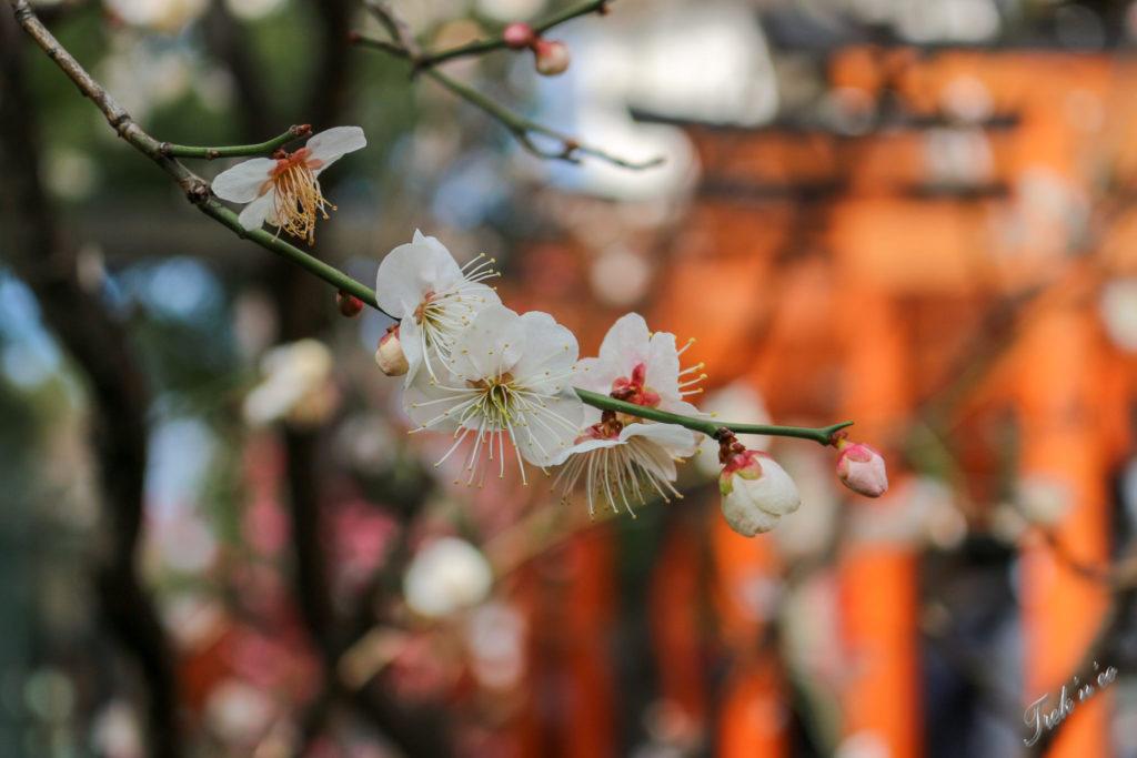 arbre en fleurs ueno