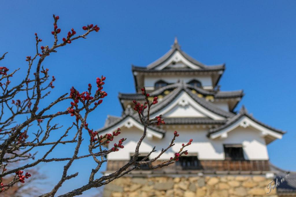 château d'Hikone