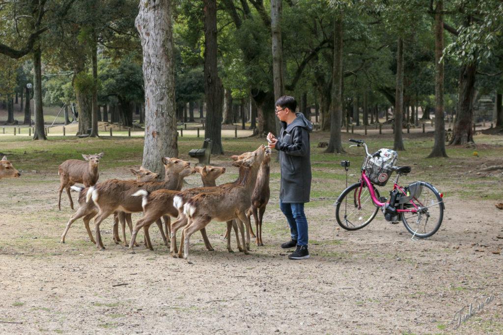 biches à Nara
